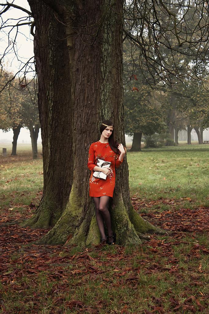 Dans les bois silencieux
